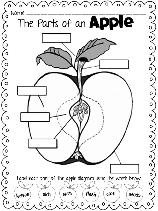 apple diagram kindergarten