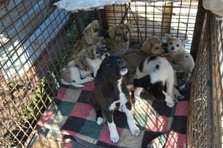 These puppies were rescued from the streets of Romania by Maoland Shelter. Go visit the FB page and maybe support in some way.All non publicanimal workers are living a hellish times now in Romania and need our support,both financially and mentally. SHARE! PLEACE!