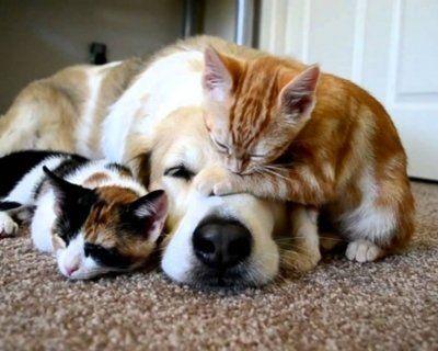 En güzel kedi köpek resimleri