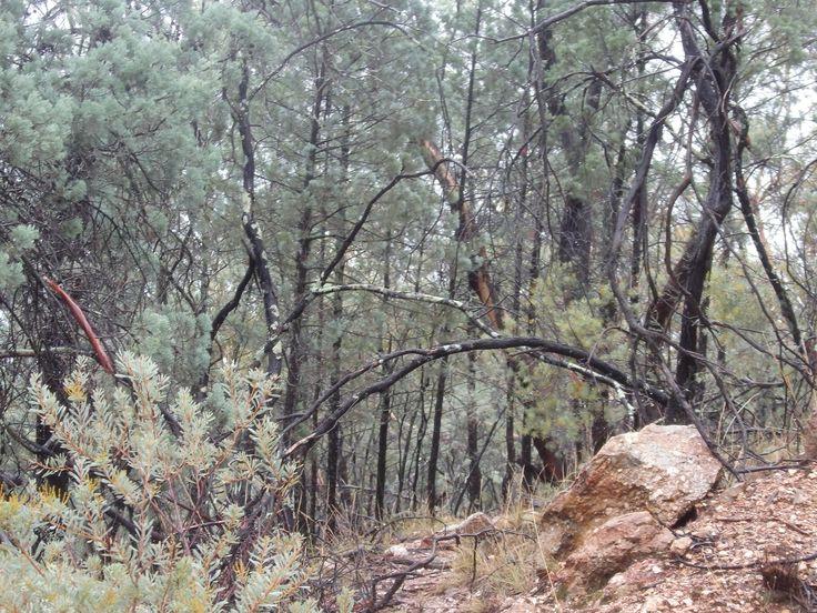 Walking through the bush heart of New South Wales as Ambassador #AusDay