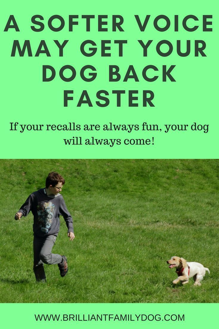 The Tone Of Your Voice Can Make Or Break Your Dog S Recall Dog