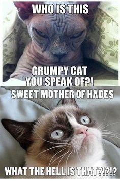 Grumpy cat, grumpy cat meme, grumpy cat humor, grumpy cat quotes, grumpy cat funny …For the funniest memes and jokes visit www.bestfunnyjoke...