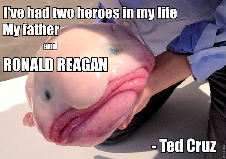 Enjoy These Fresh Ted Cruz Memes From the Ted Cruz Meme Page