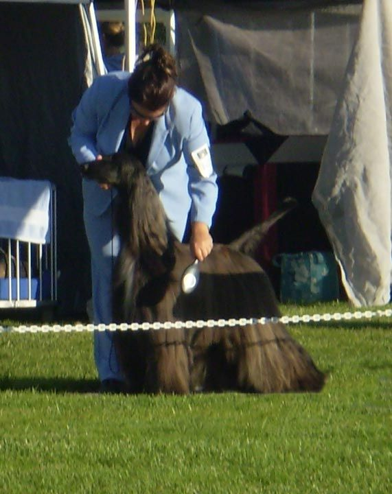 """How to master the fear of failure once    you've crossed the arbitrary line People often ask me, """"My dog doesn't like the show ring. Can you help me?"""" My usual response is, """"Well, that depends…"""