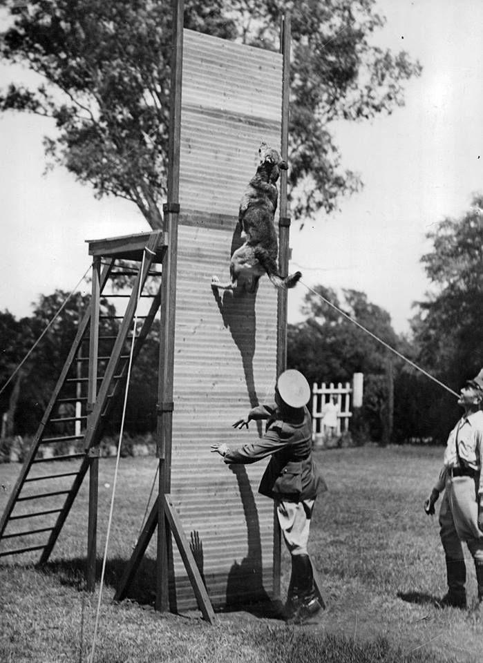 1945 'Arras' ovejero de la Gendarmería Nacional al batir el récord de altura