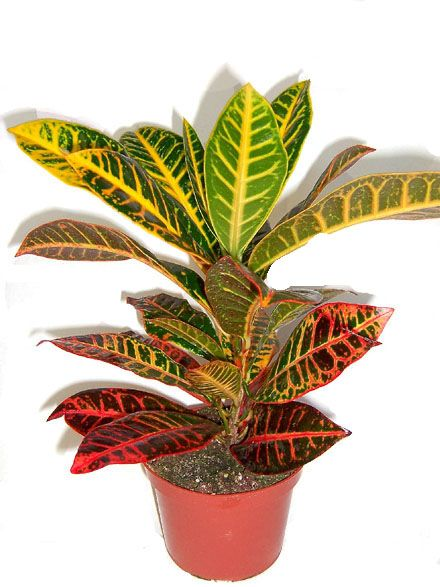 25 beste idee n over plante interieur depolluante op pinterest kamerplant - Depollution par les plantes ...