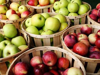 Apple picking in the Chicagoland area