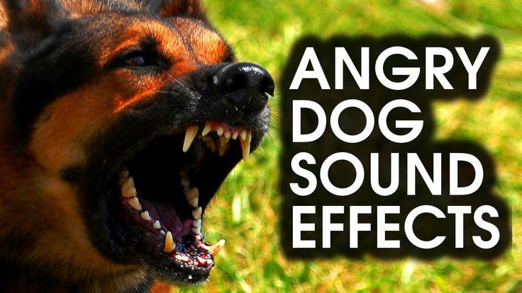 Barking Dog Sound Clips Free