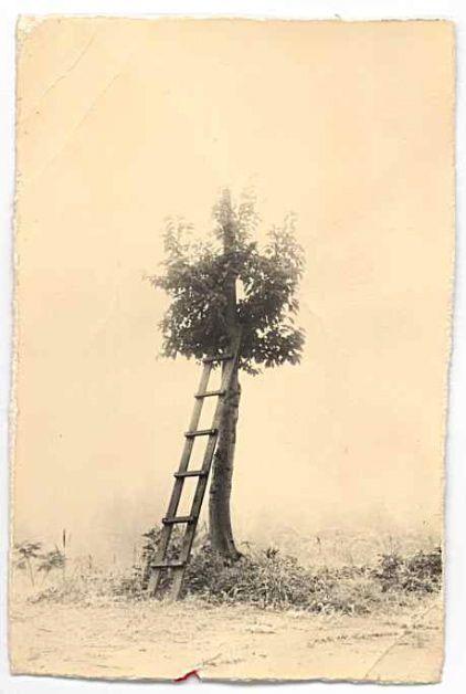 Masao Yamamoto.: Ladder, Vestige Yamamoto, Inspiration, Trees Houses, Art Photography, Is The Mamoto, Yamamoto Masao, Old Photos, Photography Couple