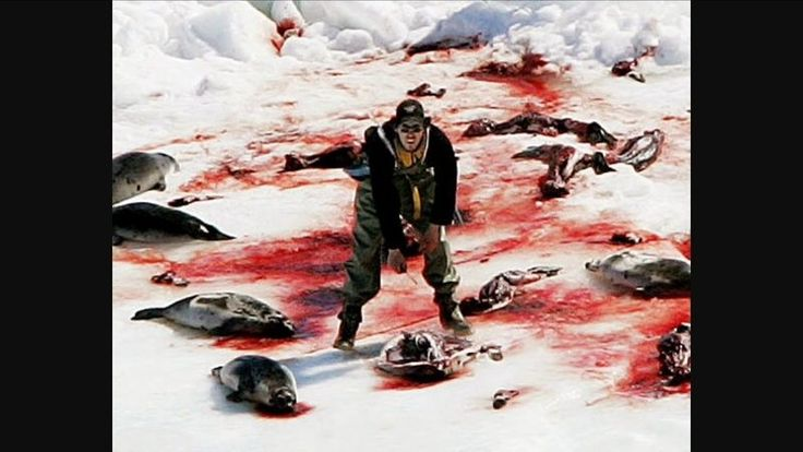 Petition · Justin Trudeau: End the Canadian Seal Hunt · Change.org