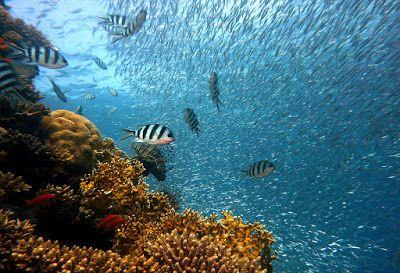Newsollo: Disastro alla Grande Barriera Corallina austaliana...
