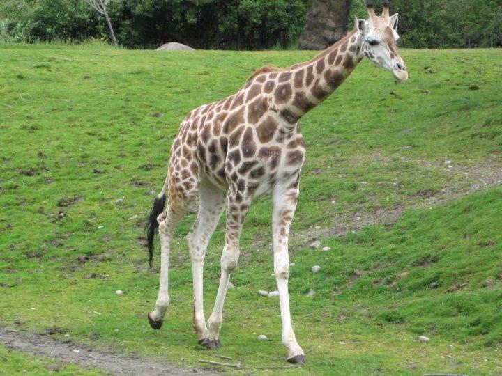 Woodland Park Zoo | animals. | Pinterest