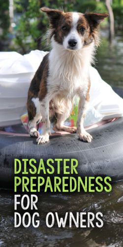 Whether natural or man-made, disasters can happen any time, any where. And being prepared in advance of an emergency is essential to your dog's survival.