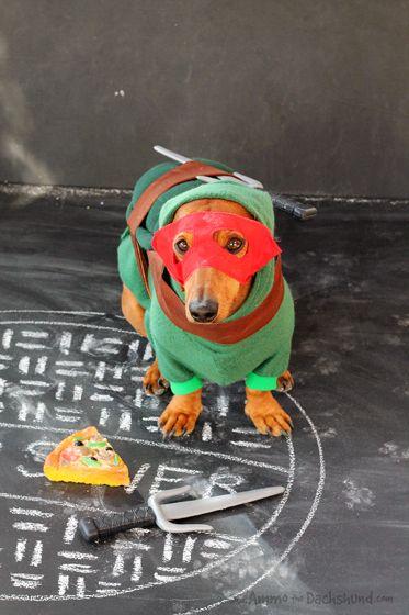 Dachshunds 2013 Halloween Costume - Raphael the Ninja Turtle