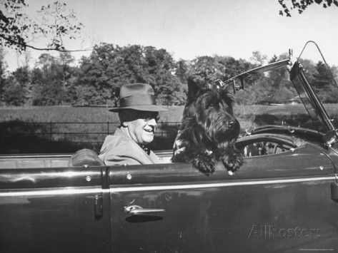 Roosevelt driving in his blue Ford Phaeton with his dog Fala through fields and forests of Hyde Park.