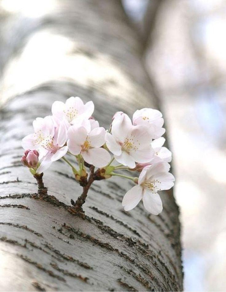 Лучшее фото про весну как реальной