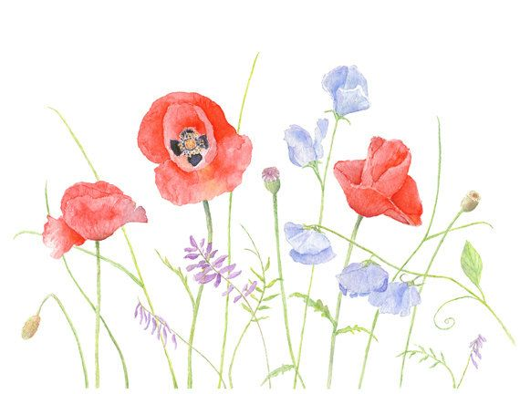 Poppies and Sweet Peas Watercolor Painting  (Kathleen Maunder)