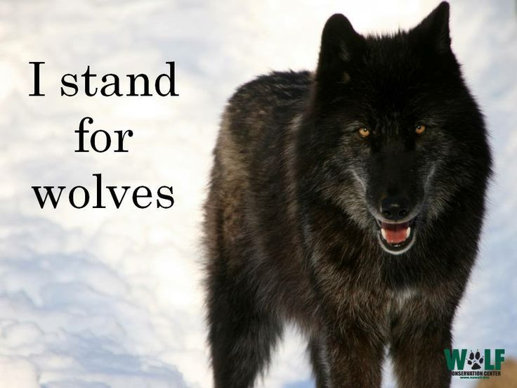 I Stand For Wolves
