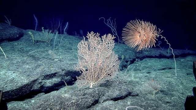Vous vous souvenez de la petite pieuvre Casper, de Dumbo, ou encore de la petite méduse découverte dans la fosse des Mariannes?...