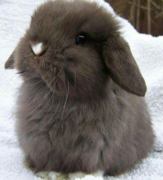 Freches Kaninchen