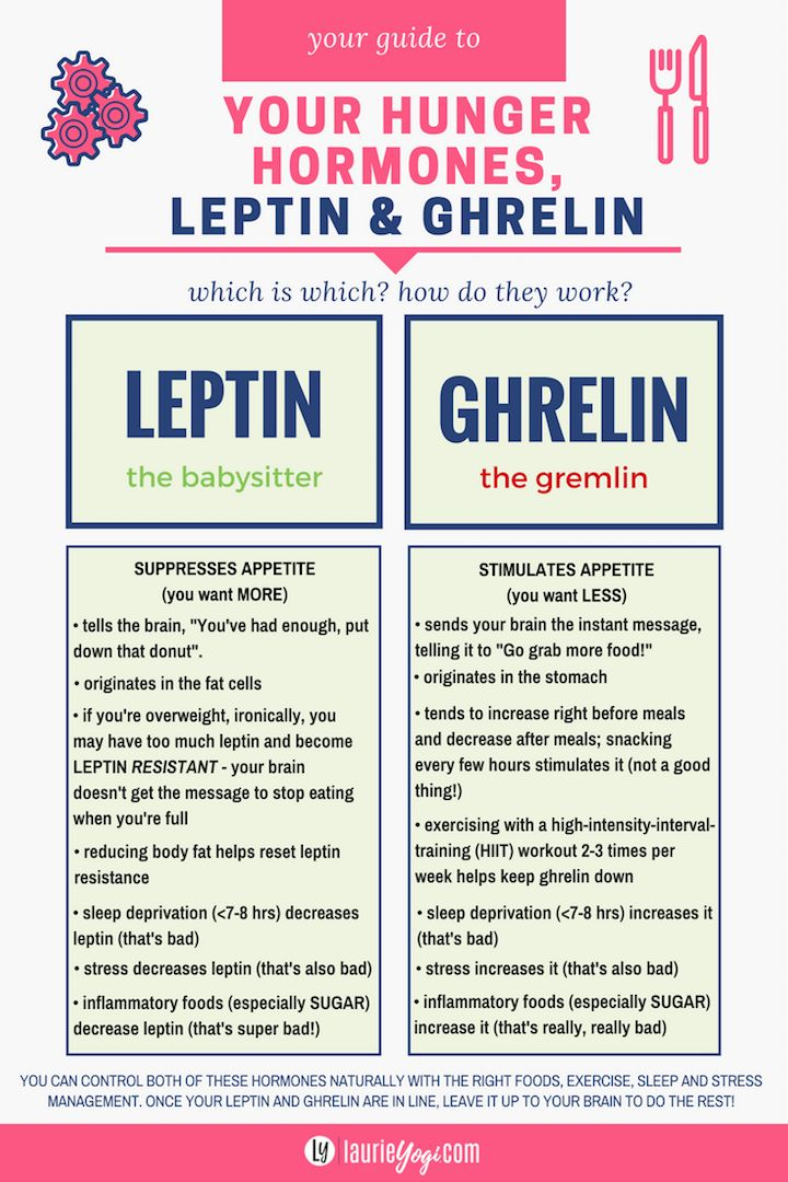 leptin and ghrelin hunger hormone guide