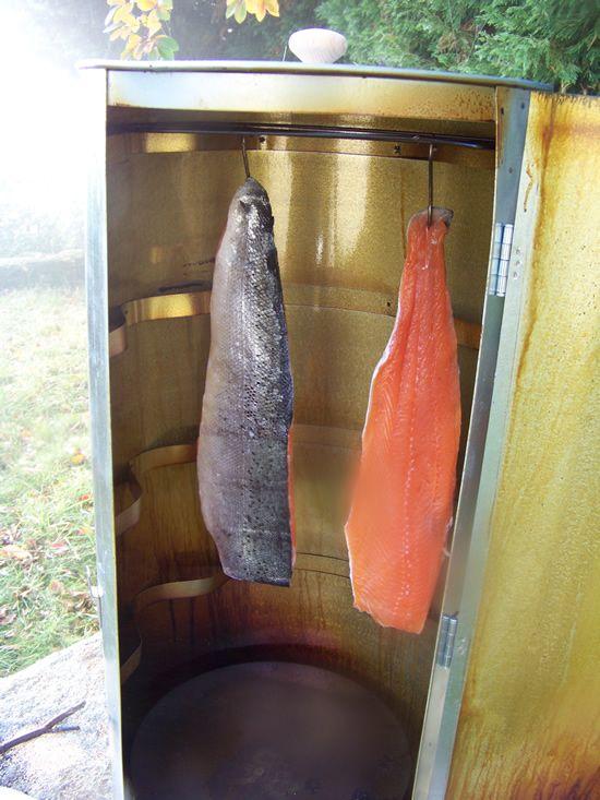 saumon suspendu dans le fumoir