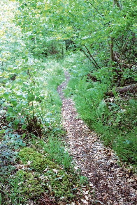 La forêt dominiale de Guebwiller