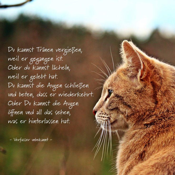 Du kannst Tränen ... #ANUBIS-Tierbestattungen #Trauergedicht