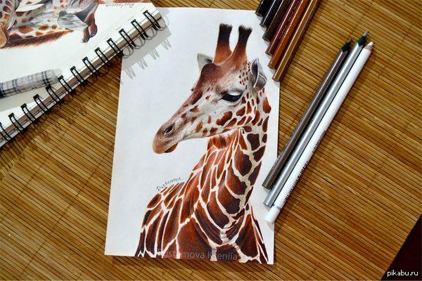 Мой рисунок. Жираф Люблю жирафов :)  Карандаши детские, разных фирм  рисунок, рисунок карандашом, творчество, жираф, фотореализм, интересное