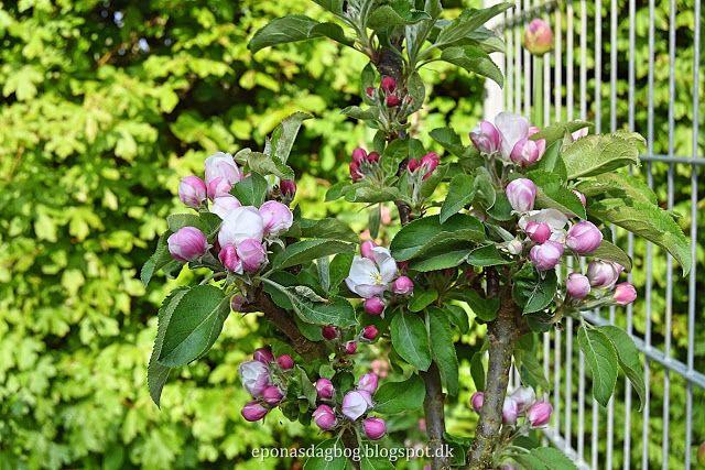 Frugttræer i den lille have