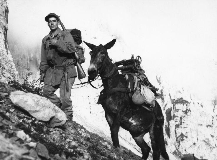 muli e alpini