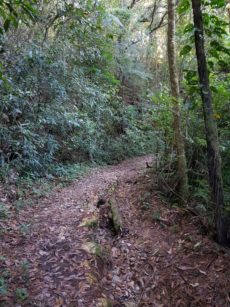 Sendero los plancitos La tigra Honduras tegucigalpa