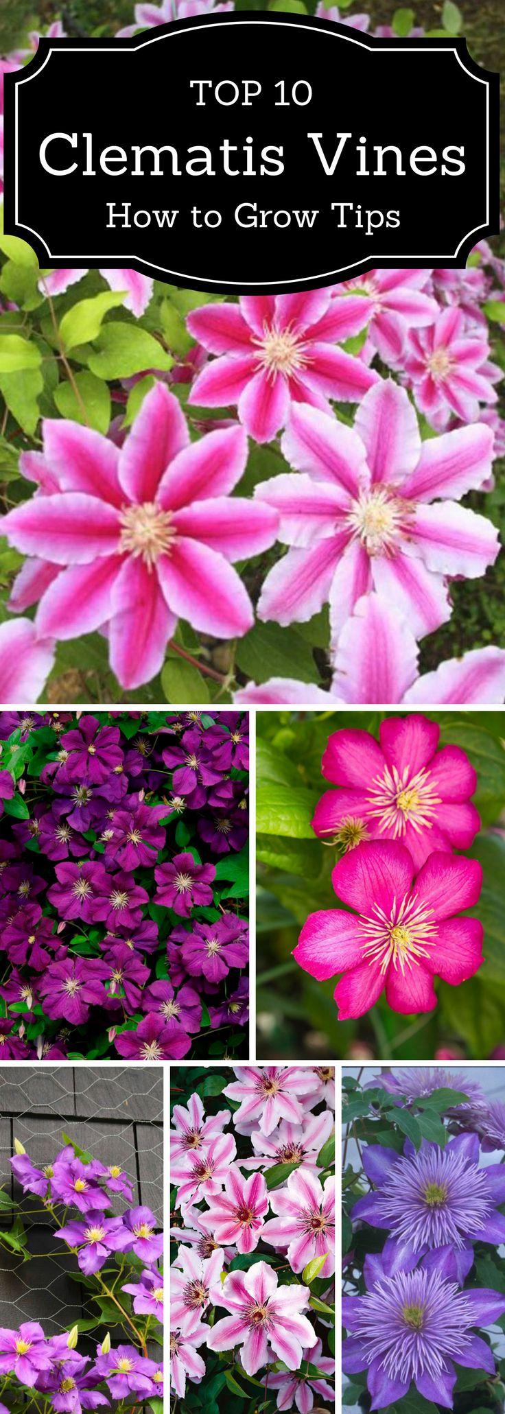 best 25+ outdoor flowers ideas on pinterest | full sun landscaping