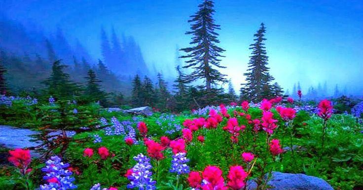 Bir gün Hz Peygamber (s.a.v) ashabıyla mescitte otururken Cebrail a.s geldi ve şöyle dedi : Ya Muhammed! Hakk Teala sana selam gönder...