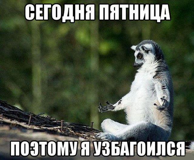 кронциркулем пятница картинки мемы всего котята-сфинксы