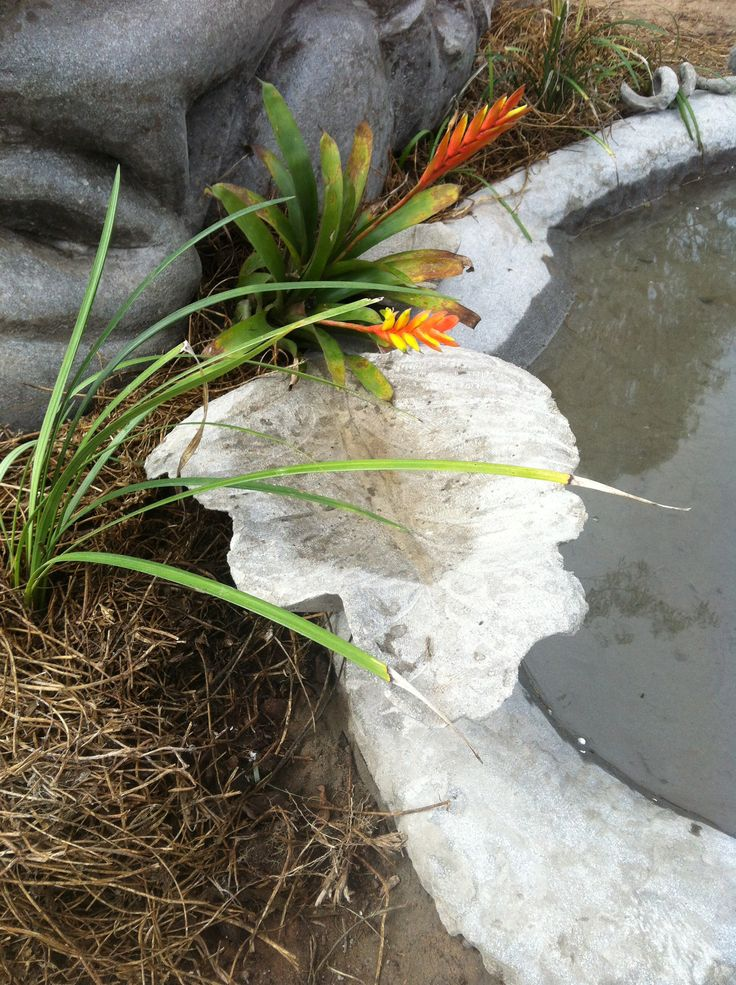 Part of Fish pond, Cement Fondue