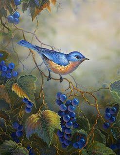 7 das Artes: Os lindos passarinhos de Sam Timm.