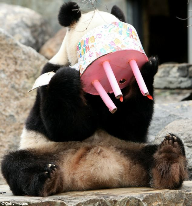 efeac8335b0c05544c6faf5d94dc6335 panda birthday my birthday 12 best birthday images images on pinterest birthday images