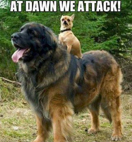 At Dawn We Attack
