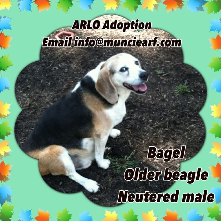 Adopt Bagelreduced adoption fee on (With images) Dog