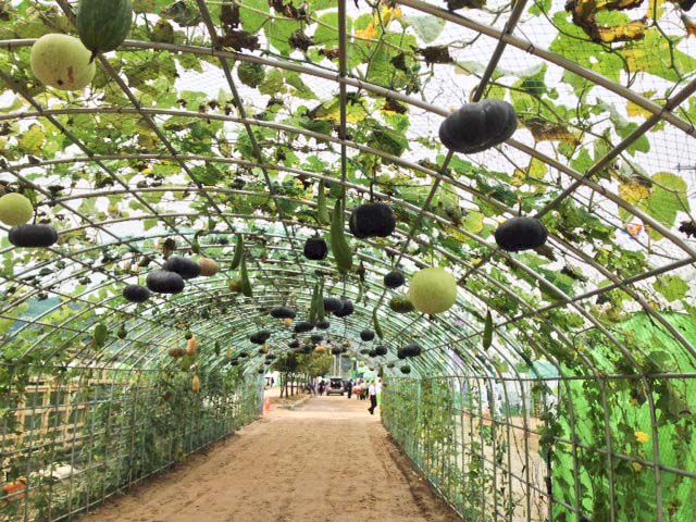 Gourd Trellis My Garden Projects Pinterest Slow Food