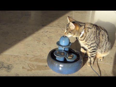 Katzenbrunnen aus Keramik - Dieser Trinkbrunnen bringt Ihre Katze dazu genug zu trinken - YouTube