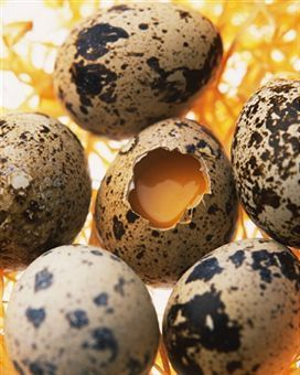 Quail Egg Nutrition  sounds like a little miracleworker this