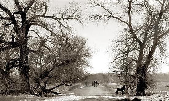 "Contemporary Landscape Artists International: Fine Art Photography,Landscape, Tree ""Winter Walk"" by International Photographer Kit Hedman"