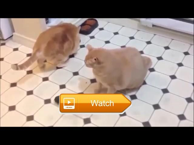 Kittens Playing Compilation Hours FUNNY CATS AND DOGS VIDEO COMPILATION  Unforgettable Moments Caught on Live TV Subscribe More Videos Thank for watching Please Like Share And SUBSCRIBE  on Pet Lovers