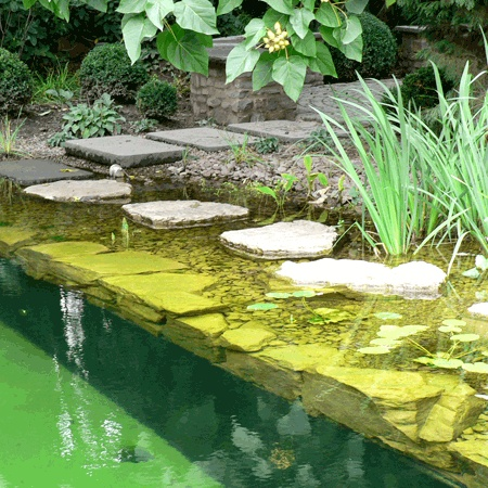 45 best natural pool swimming pond images on pinterest for Small natural pond