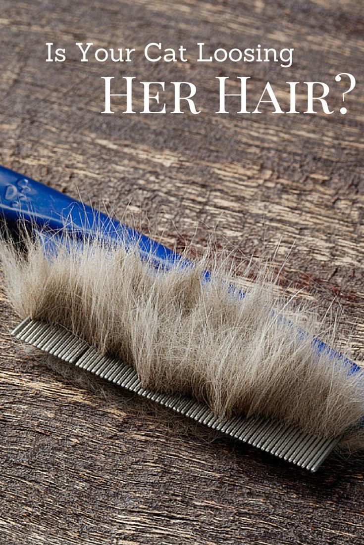 Is your cat losing her hair? Find out why...