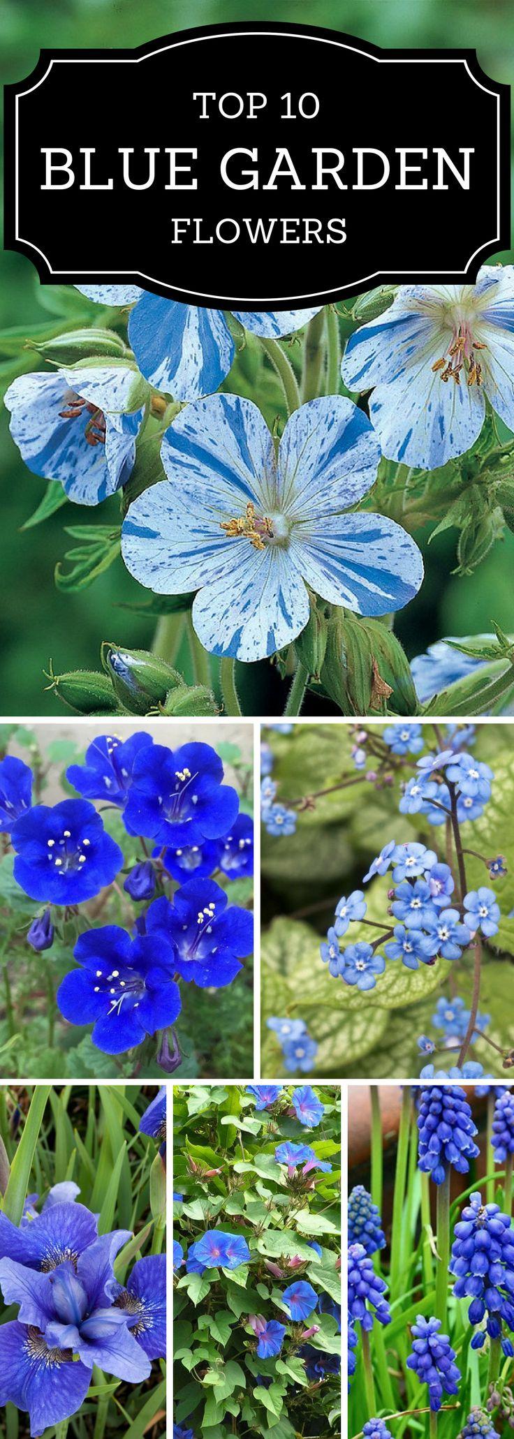 10 blue garden flowers