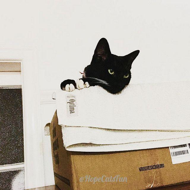 Oh Mittens you are so cute in your box. @hopecatsfun Cut black cat