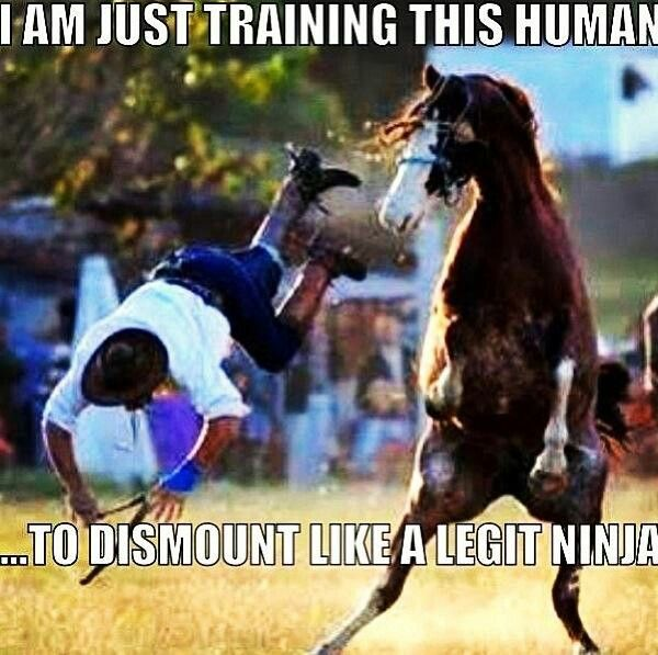 Haha. What a good human trainer that horse is! #horsehumor